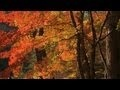 Piano Music.lyrics music.autumn scenery.10 min